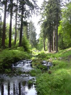Cragside gardens in Rothbury, Northumberland. Picnics here as a child