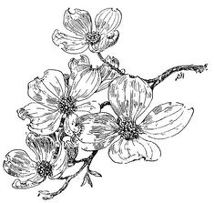 Dogwood Tree Flower Drawing Sketch Coloring Page