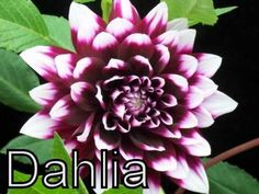 Flowers, Different Types of Flowers, Various Flower, Flowering plants