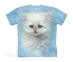 Fluffy White Kitten