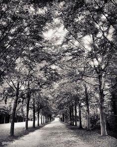 2015-09-11 #France #Versailles Another path #travel #landscape #garden #park #wanderlust #fakation #tourism #trees #summer #latergram #voyage #B&W #N&B #blackandwhite #bw #bnw #mono #nb #monochrome #blancoynegro #byn #bandw #noiretblanc #SchwarzWeiss #iphone #gaelic69 (à Château de Versailles)