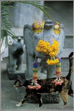 le chat et la statue de l'éléphant