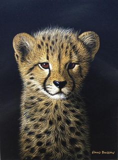 Purchase artwork Cheetah Cub Study - Acrylic Painting by South African Artist David Bucklow