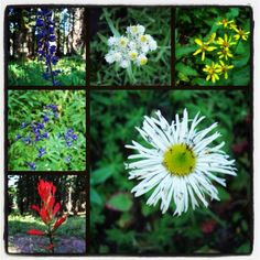 Wildflowers from White National Forest