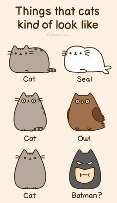 I love kitties <3