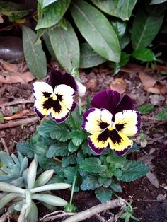 Flower in Matera