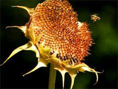 Sonnenblumenkerne - Jahreszeiten - Galerie - Community