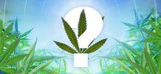Der Frühling ist da und es ist bald Zeit damit zu beginnen einige Samen in den Boden zu bringen. Um dem unentschlossenen Züchter zu helfen haben wir hier ist eine Liste unserer Top 10 der besten femin #cannalovers #cannabis #canna #welovecannabis #lovecanna
