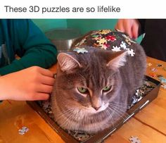 These 3D puzzles are so lifelike.