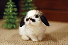 Awwww this bunny looks like it has a moustache!
