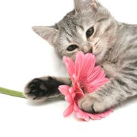 Your cat can suffer from seasonal allergies.