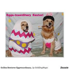 Golden Retriever Eggstraordinary Easter Bunny Poster