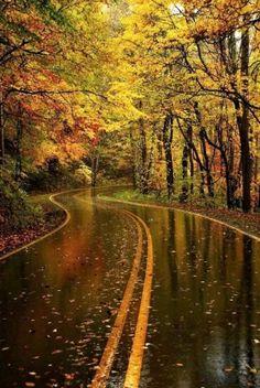 Autumn Rain.