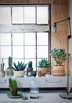 Cacti, Plants, green, #urbanjunglebloggers, urban jungle http://blog.bodieandfou.com/