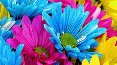 Colorful Flower Graphics | Daisy Wallpaper High Definition 16584 - Amazing Wallpaperz