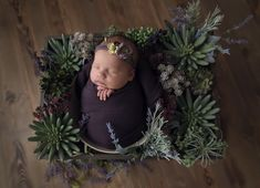 Baby in a bucket in a box with plants Newborn Shoot, Newborn Twins, Foto Newborn, Newborn Poses, Newborns, Baby Girl Photography, Infant Photography, Newborn Pictures, Baby Pictures