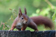 Happy Squirrel, Squirrel Pictures, Racoon, Squirrels, Make Me Smile, Drawings, Dogs, Photos, Chipmunks