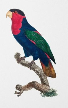 Your place to buy and sell all things handmade Tropic Jungle, Bird Prints, Framed Prints, Natural Background, 5 Image, Vintage Birds, Bird Art, Natural History, Beautiful Birds