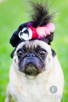 Funky Feather Dog Beret Hat by KOCouture on Etsy Fluffy Animals, Animals And Pets, Cute Animals, Pugs In Costume, Animal Dress Up, Animal Hats, Boy Dog, Dog Rules, Cute Pugs