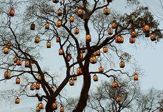 rustic fall halloween wedding decorations