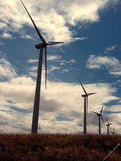 wind power - wind farm near Moro, OR