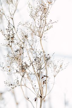 Branch 8x12 - Fine Art Photography Wall Decor Office Art Nature Texture Brown Winter Autumn. $25.00, via Etsy.