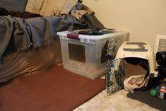 Playpen, Rats, Home Appliances, Animal, House Appliances, Dog Playpen, Appliances, Animals, Animaux