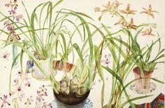 Elizabeth Violet Blackadder (1931-) Orchids 1983 (68 x 103,5 cm)
