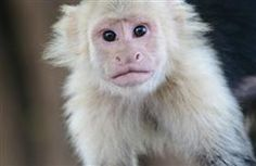 """Have you ever transported your pet on a plane?  Was it an easy or frustrating process?   Did you hear about Justin Bieber's recent attempt to transport his """"pet"""" monkey while flying privately into Germany.  Evidently, Bieber didn't plan properly and the monkey was quarantined.   Learn more via Pet360.com"""