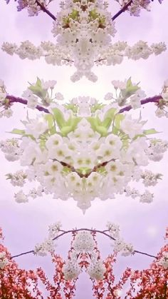 I enjoy spring so much and it's over so quickly so I created this stunning symmetry video Wallpaper Nature Flowers, Wallpaper Art, Batman Pictures, Garden Entrance, Weather Seasons, Spring Blossom, Moving Pictures, Fun Prints, Photography Photos