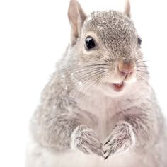 "Fine Art Squirrel Photo Print """"Grey Squirrel in Snow"""""