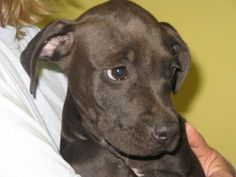 Adoptable Dog of the Day post