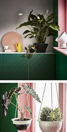 Wil je kamerplanten? Bij IKEA vind je een ruim aanbod, waaronder de SPATHIPYLLUM lepelplant. De lepelplant voelt zich het best op een plekje in de schaduw en heeft veel water nodig. Wij plaatsten ze in de hoek op een groene kast.