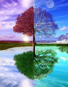 four seasons art Tree Photoshop, Seasons Of The Year, Tree Art, Tree Of Life, Cool Pictures, Illustration, Artwork, Four Seasons Painting, Pretty