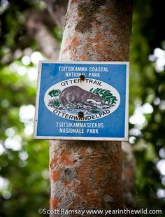 Otter trail Otters, Hiking Trails, Cry, Places Ive Been, South Africa, World, Outdoor Decor, The World, Otter