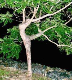 daphne the laurel, greek mythology