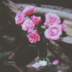 Veronica, Flower Art, Art Photography, Bloom, Rose, Flowers, Plants, Painting, Instagram