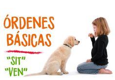 Hoy en nuestro #blog de #mascotas ejercicios para que tu #perro aprenda a #sentarse o #venir ☝️🐶 órdenes básicas