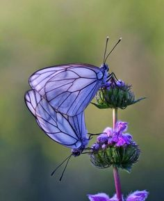 nice All Things Blog: Flowers
