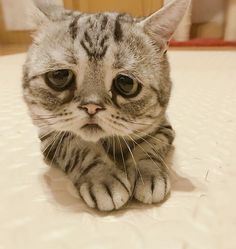 Meet Luhu, The Saddest Cat In The World Whose Photos Will Break Your Heart