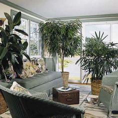 Greenery Without Green Thumbs | Easy Houseplants | Photos | Gardening | Yard  Garden | This Old House