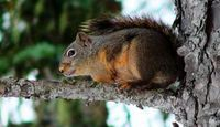 Will Vinegar Keep Squirrels Away?