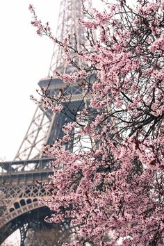 Ready to Ship, Paris Photography, Paris Je t'aime, Paris in the Springtime, Pink Cherry Blossoms Eiffel Tower, Paris Home Decor - Blush Pink by rebeccaplotnick on Etsy https://www.etsy.com/listing/126100034/ready-to-ship-paris-photography-paris-je