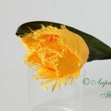 игольчатый тюльпан