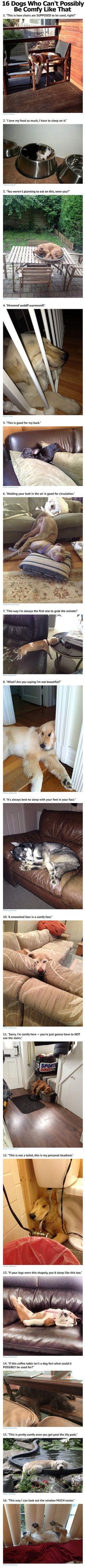 16 Dogs Who Can't Possibly Be Comfy Like That cute animals dogs adorable dog puppy animal pets funny animals funny pets funny dogs