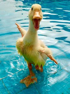 A wet duck is a happy duck.