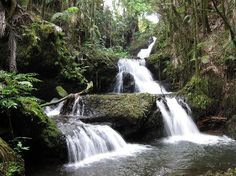 Google Image Result for http://www.alternative-hawaii.com/activity/images/onomea_waterfall.jpg