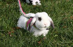 Budget Bunny website. cheap ideas to keep bunnies busy.