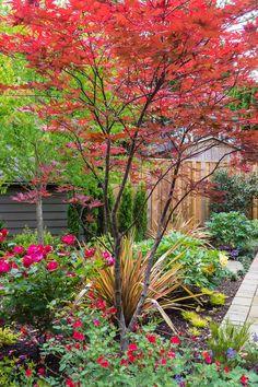 Bonsai Garden, Garden Trees, Trees To Plant, Acer Garden, Garden Plants, Garden Landscape Design, Small Garden Design, Garden Landscaping, Patio Design
