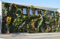Green over Grey has transformed yet another boring old wall into a lush vertical garden in Vancouver. The Semiahmoo Public Library features over individual plants! Living Green Wall, Living Walls, Vancouver, Green Facade, Moss Wall, Sky Garden, Green Architecture, Wall Installation, Urban Farming